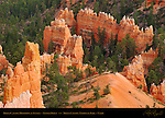 Bryce Canyon Hoodoos at Sunset, Sunset Point, Bryce Canyon National Park, Utah