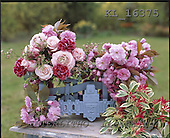 Interlitho, FLOWERS, photos+++++,light roses,KL16375,#f# Blumen, Natur, flores, naturaleza