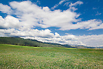 Open land on the western edge of Missoula, Montana