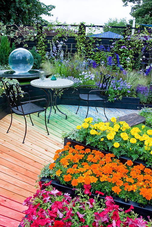 Mixture of hot to cool colors in garden path and plantings of flowers,  annuals and