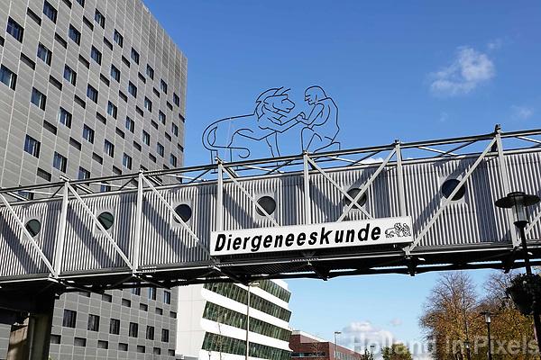 Nederland Utrecht 2018. Utrecht Science Park (De Uithof). Faculteit Diergeneeskunde.  Foto Berlinda van Dam / Hollandse Hoogte