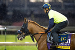 November 1, 2018: Blue Prize (ARG), trained by Ignacio Correas, exercises in preparation for the Breeders' Cup Distaff at Churchill Downs on November 1, 2018 in Louisville, Kentucky. Alex Evers/Eclipse Sportswire/CSM