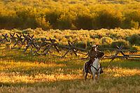 Woman on horseback in pasture, Triangle X Ranch, Grand Teton National Park, Teton County, Wyoming, USA