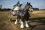 'Perceval' Sarah Lucas artwork Snape Maltings, Suffolk, England