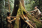 Logging huge tropical hardwood trees in a Daiya Malaysia concession, a Japanese multinational working in Sarawak during the early nineties. Rejang, Belaga district, Sarawak, Borneo 1991<br />