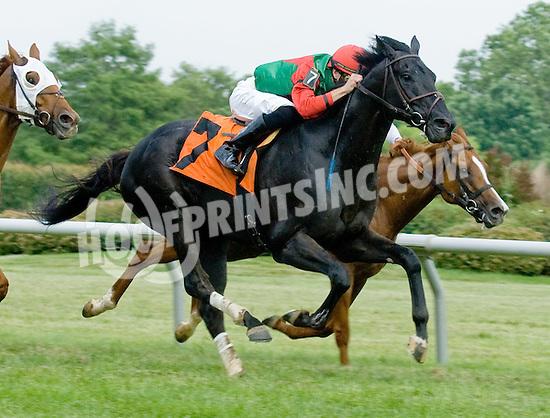 Mikoshi winning at Delaware Park on 6/9/12