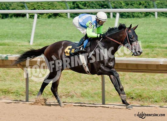 Margano winning The Eight Thirty Stakes at Delaware Park on 7/8/13 - Barbaro's little brother