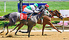 Southernperfection winning at Delaware Park on 7/11/16
