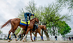LOUISVILLE, KENTUCKY - APRIL 28: Improbable, trained by Bob Baffert, heads to the track before exercising in preparation for the Kentucky Derby at Churchill Downs in Louisville, Kentucky on April 28, 2019. Scott Serio/Eclipse Sportswire/CSM