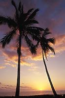 USA, Hawaii, Hawaii Island (Big Island), City of Refuge, sunset through palm trees