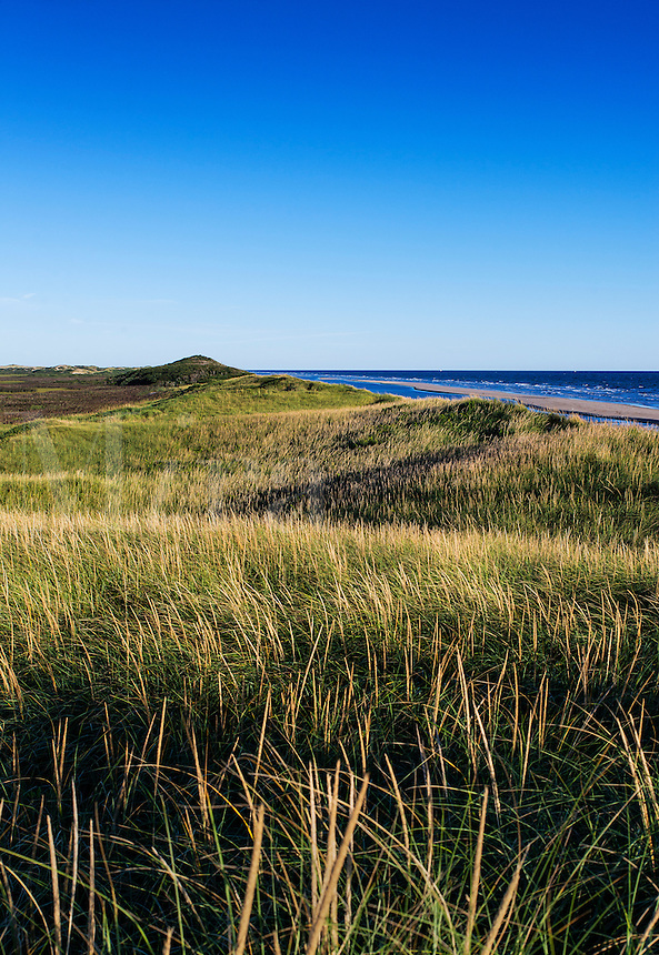 Lush dune grass and dunes bordering Head of the Meadow Beach, Truro, Cape Cod, Massachusetts, USA
