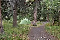 Igloo creek campground, Denali Park Road, Denali National Park, Alaska.