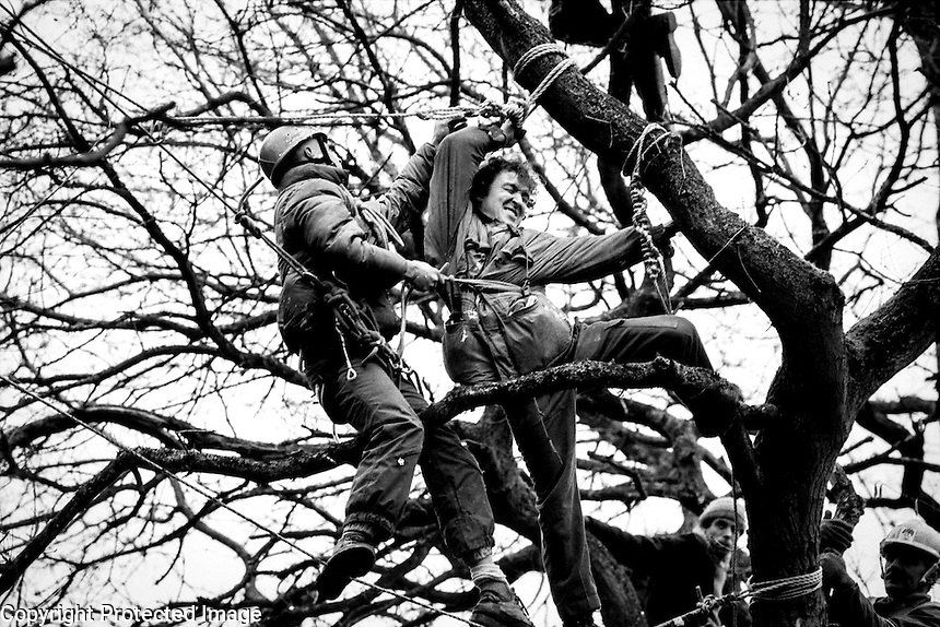 Newbury Bypass. 1996<br /> A climber working for the Sheriff places a rope around the protester before pulling him out of the tree that he is occupying.<br /> &copy;Andrew Testa/Panos