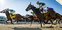 OLDSMAR, FL - JANUARY 21: The pack passes the finish line for the first of 2 passes, during the 33rd running of the Wayward Lass Stakes, on Skyway Festival Day at Tampa Bay Downs on January 21, 2017 in Oldsmar, Florida. (Photo by Douglas DeFelice/Eclipse Sportswire/Getty Images)
