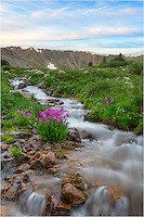 I had hiked up to shoot Colorado wildflowers at sunrise. After the sun appeared and then disappeared behind the clouds, I moved to a small snow-fed stream to work that area. I found this little patch of pink Parry's Primrose with a soft pastel sky in the background and couldn't resist seeing what sort of Colorado images I could take home with me.<br /> <br /> This little landscape comes from Butler Gulch, one of my favorite places close to my house in Winter Park.