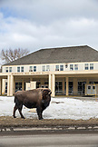 USA, Wyoming, Yellowstone National Park, a bison stands guard in front of the Mammoth Hot Springs Hotel