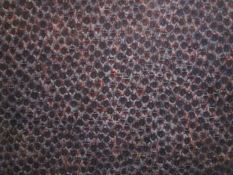 WHORLED EXPLORATIONS - Kochi Muziris Biennale 2014 - Arun K S work.