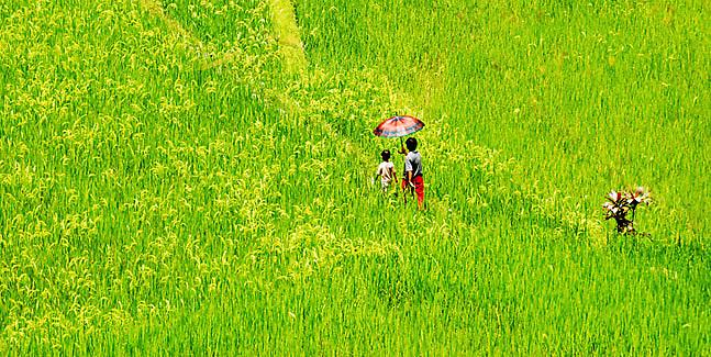 Hapao Rice Terraces, Hungduan, Ifugao - Philippines