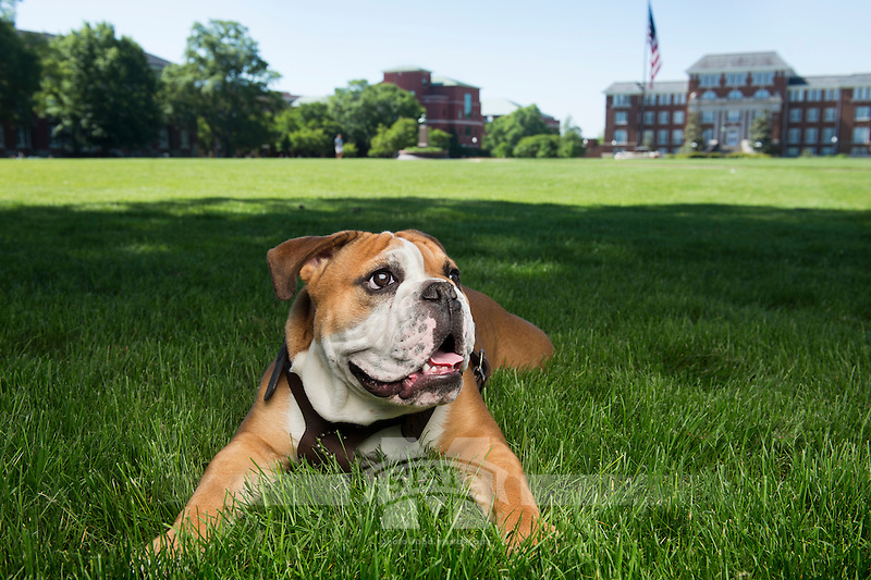 Jak (Bully XXI) relaxing on the Drill Field. <br />