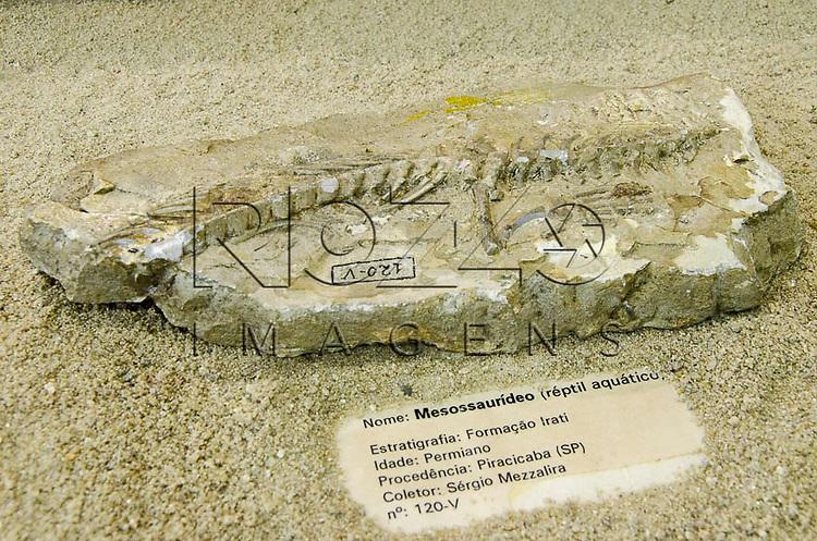 Mesossaurídeo ( réptil aquático). Estratigrafia: Formação Irati, Idade: Permiano, Procedência: Piracicaba - SP. Museu Geológico Valdemar Lefèvre, São Paulo - SP, 07/2014.