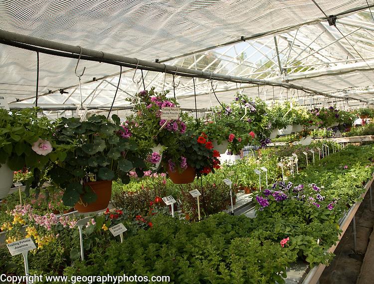 Plants on sale inside greenhouse of nursery