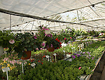 Plants on sale inside greenhouse of nursery