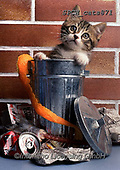 Xavier, ANIMALS, REALISTISCHE TIERE, ANIMALES REALISTICOS, cats, photos+++++,SPCHCATS871,#a#, EVERYDAY