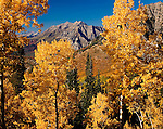 Autumn aspens, Mt. Timpanogos, Wasatch Mountains