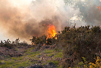 Heathland Fire - Ashdown Forest