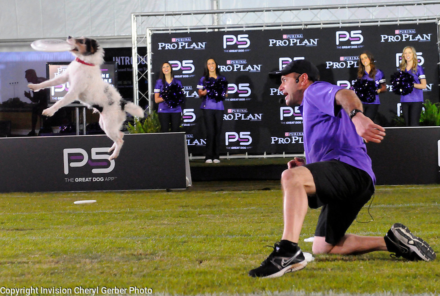 Purina Pro Plan Performance Team trainer John Casey, who helped develop the new Pro Plan P5 app, and his Jack Russell terrier put on a high-flying show during The Purina Pro Plan Canine Combine, on Wednesday, Jan. 30, 2013 in New Orleans, LA.  (Photo by Cheryl Gerber/Invision for Purina Pro Plan/AP Images)