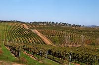 vineyard herdade de sao miguel alentejo portugal