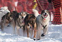 Jen Seavey's lead dogs at the Restart of the 2009 Iditarod in Willow Alaska