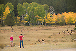couple, watching, viewing, tourism, visitor, American elk, wapiti, Cervus elaphus, October, fall, autumn, afternoon, Beaver Meadows, Rocky Mountain National Park, Colorado, USA