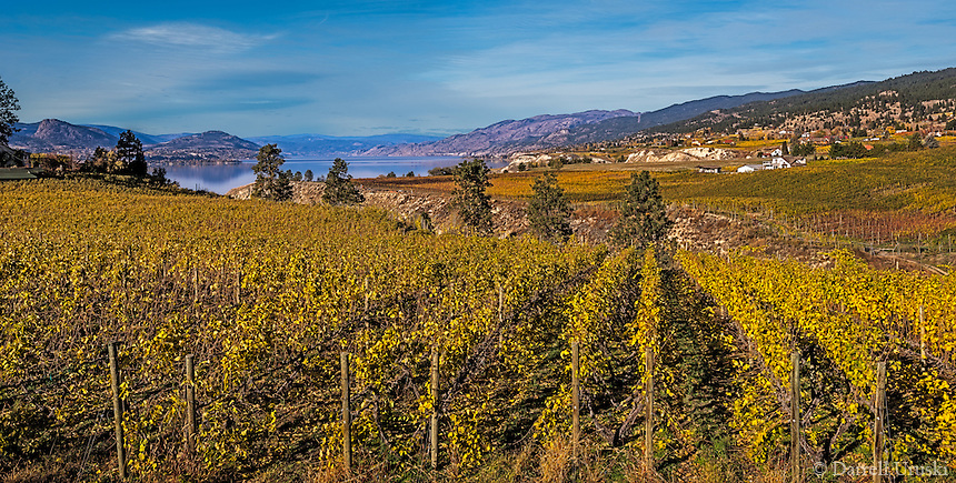 Fine Art Landscape Photograph of vineyards in British Columbia, Canada.<br />