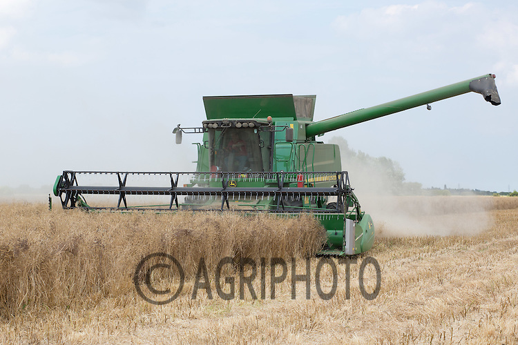 Harvesting Oilseed rape <br /> Picture Tim Scrivener 07850 303986<br /> &hellip;.covering agriculture in the UK&hellip;.