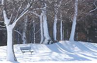 Canatara Park bench