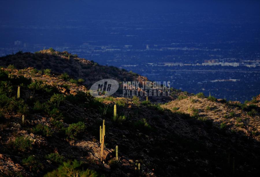 desert weather Arizona South Mountain Phoenix cactus saguaro boulders rocks bushes city
