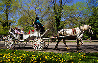 White horse carriage with tourists in Central Park at spring time in New York City, USA