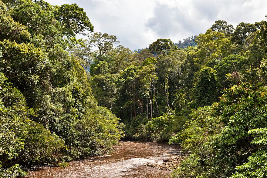 River flowing through lowland dipterocarp rainforest. Maliau Basin, Sabah, Borneo, Malaysia.