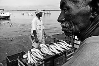 A Brazilian man sells fresh fish in the port of Belem, Brazil, 1 March 2004. Amazonia is the world's largest dense tropical forest area. Since the 16th century the original indigenous people have been virtually pushed away or exterminated. The primal ancient unity between tribes and the jungle ambient has changed into a fight between the urban based civilization and the jungle enviroment. Although new generations of white and mestizo settlers have not become adapted to the wild tropical climate and rough conditions, they keep moving deeper into the virgin forest. The technological expansion causes that Amazonia is changing rapidly.