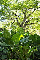 A lush, shaded spot at Allerton Gardens, Lawa'i, Kaua'i.