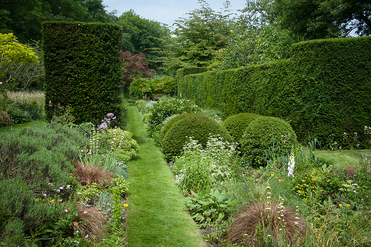 Twin borders either side of a rill run the length of the Yew Walk, Vann House and Garden, Surrey, mid June.