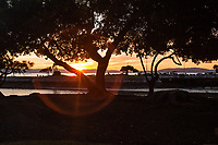 A ring around the setting sun, the result of a lens anomaly, viewed through trees at the San Leandro Marina along San Francisco Bay.