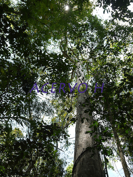 Resex Chico Mendes<br /> , Xapur&iacute;, Acre, Brasil.<br /> Foto: &copy;Eric Stoner Extra&ccedil;&atilde;o de copaiba.