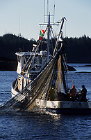 USA/Etats-Unis/Alaska/Env de Ketchikan : Retour d'un bateau de pêche au saumon et filets remplis de poissons