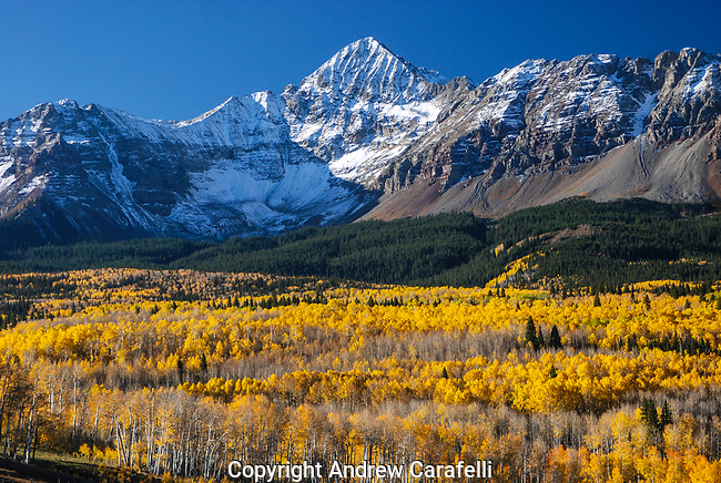 14,000 foot Wilson Peak near Telluride, Colorado flaunts her golden beauty with a new dusting of early snow amid blazing fall aspens.