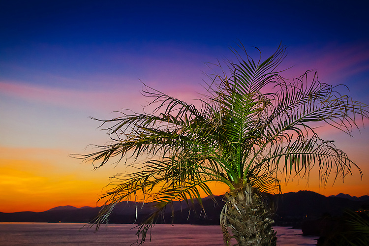 A small palm tree perches off the coast of California as the sun lights up the sky at sunset. (Photo by Jeff Speer © www.JeffSpeer.com)