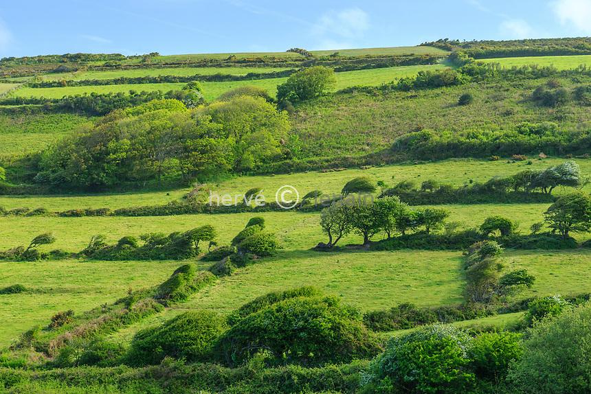 France, Manche (50), Cotentin, Cap de la Hague, Jobourg, arbres formés par le vent // France, Manche, Cotentin Peninsula, Cap de la Hague, Jobourg, landscape