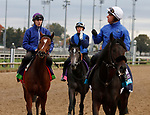 October 30, 2018 : Polydream (left), Lily's Candle (middle) and The Black Album (right) in preparation for the Breeders' Cup on November 01, 2018 in Louisville, KY.  Candice Chavez/ESW/CSM