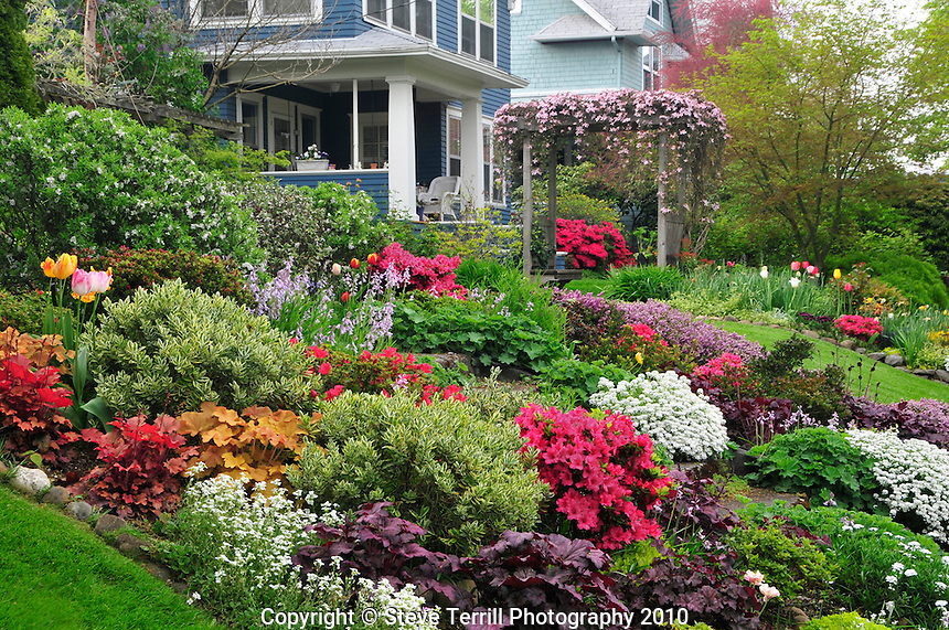 USA, Oregon, Spring blooms of tulips, azaleas, phlox & candytuft flowers in garden in NE Portland